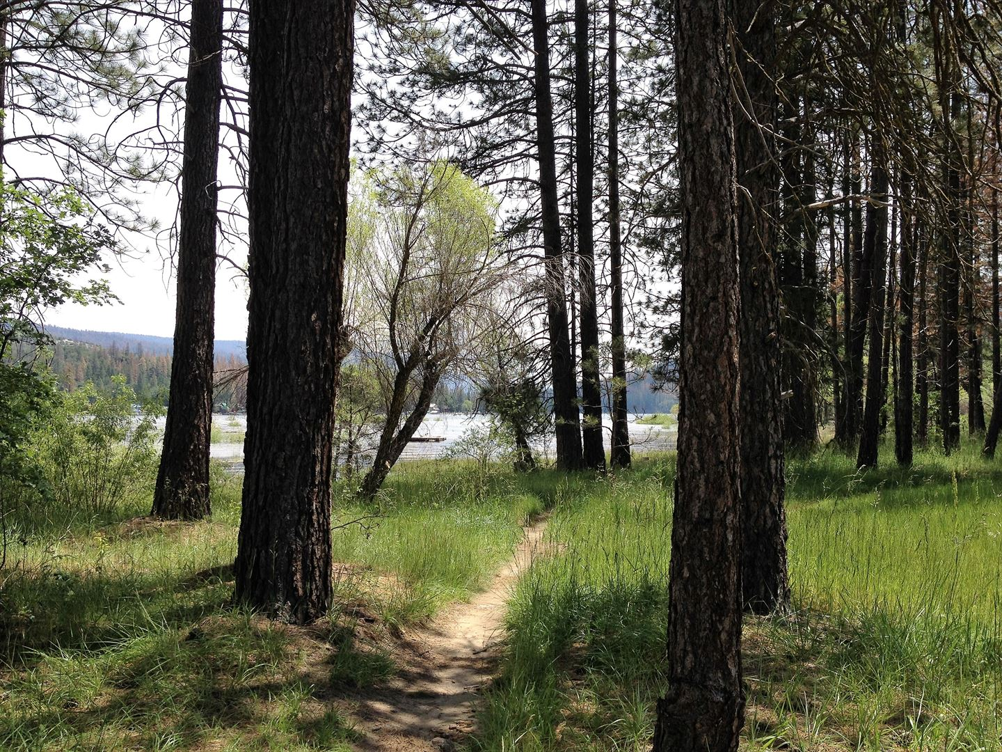 An easy 5 minute stroll through a charming wooded path takes you to the shore of Bass Lake and day use areas!