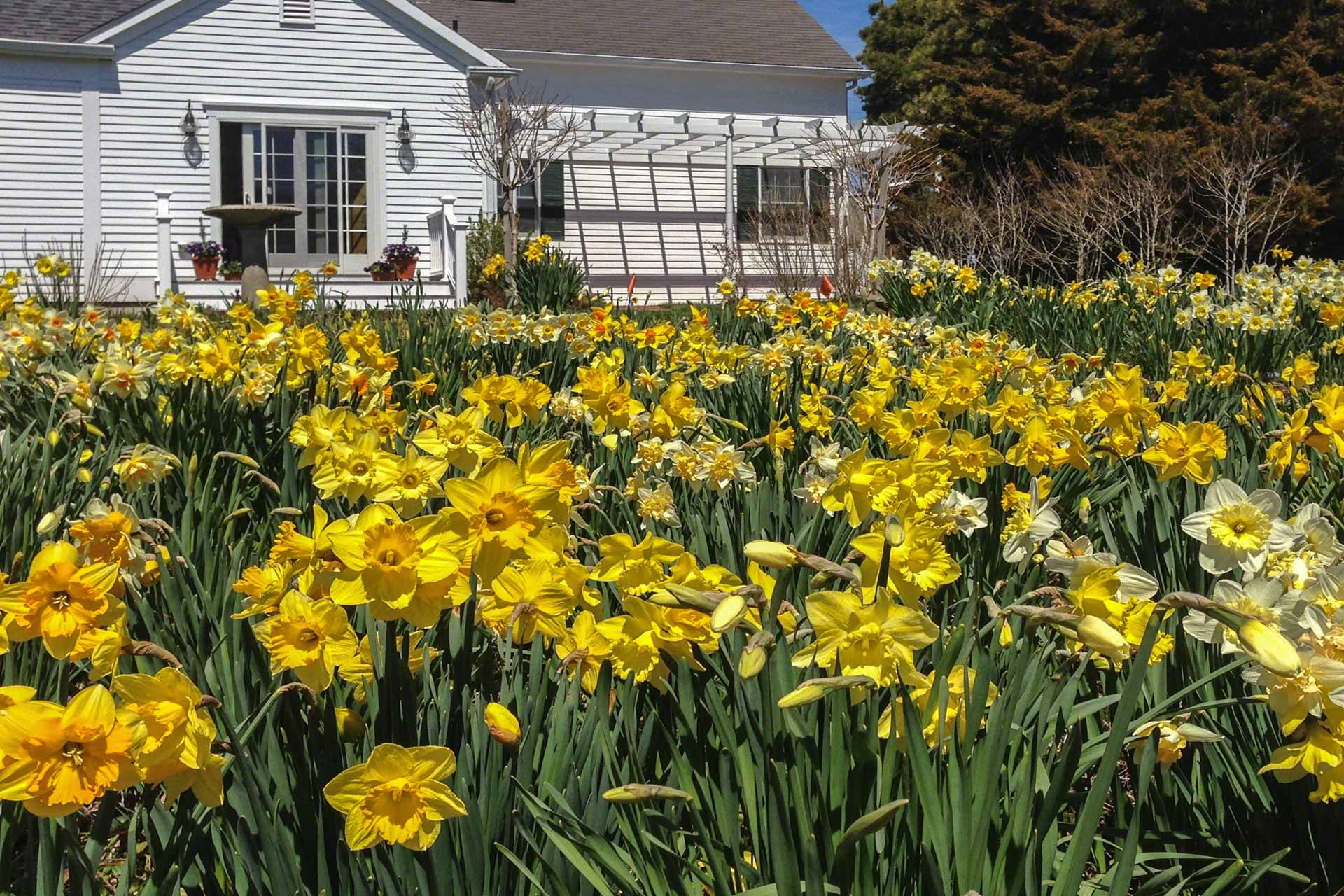 3 Road to the Plains, Edgartown Unit: Newly Listed